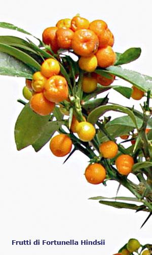 Schede pratiche pagine verdi bonsai for Terriccio per limoni in vaso